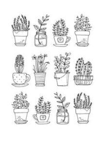 imagenes de hierbas