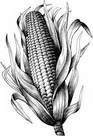 imagenes de maiz animado