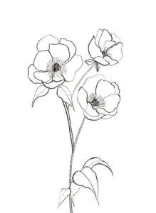 imagenes de orquidias
