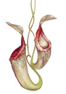 imagenes de plantas carnivoras para imprimir