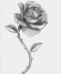 imagenes de rosas lindas