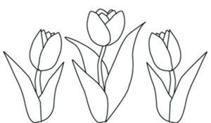 imagenes de tulipanes hermosos