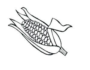 informacion sobre el maiz para niños