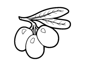 olivo para colorear