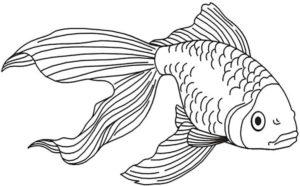 pescado para dibujar