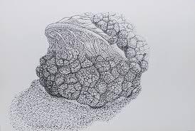 planta de coliflor