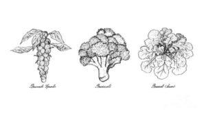 propiedades de la coliflor