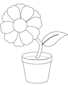 tipos de plantas con flores