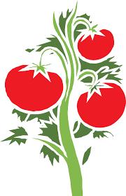 tomate en caricatura