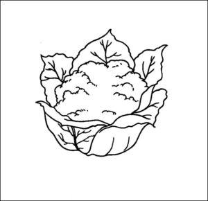 variedades de coliflor