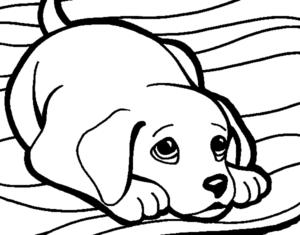 dibujos animados de animales